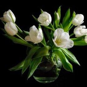 Гид по выбору цветов: любимой, маме, бабушке, сестре, подруге